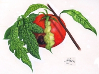 Tomato Desease